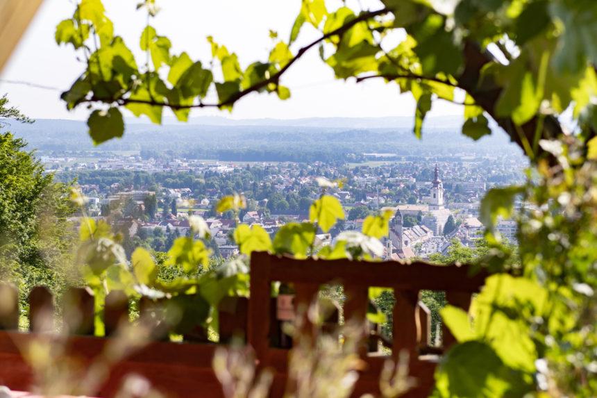Weinbau Menhart